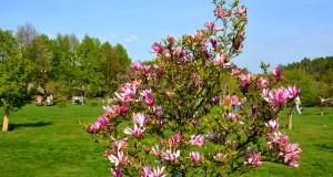 Прага весной: фото, погода и интересные локации