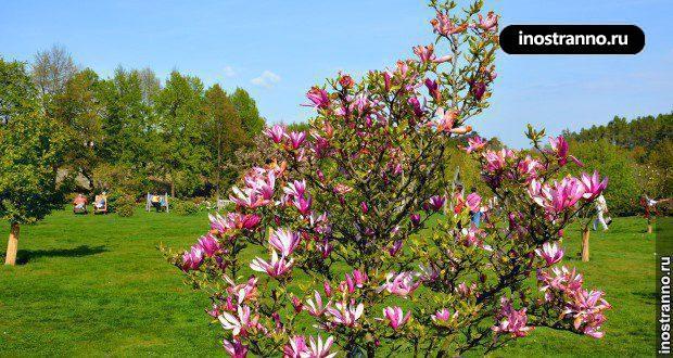 Фото Праги весной