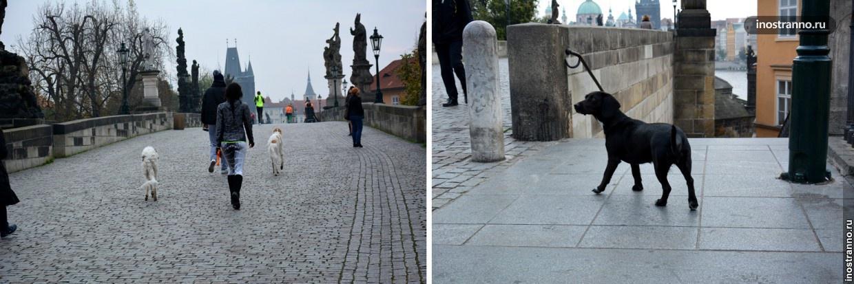 Выгул собак в Праге