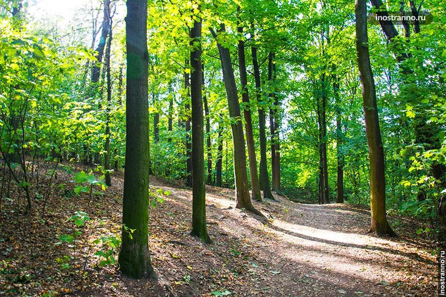 Леса Чехии