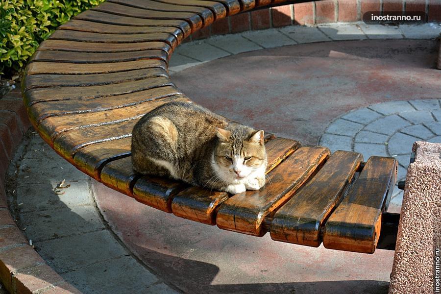 Турецкий кот в Кемере