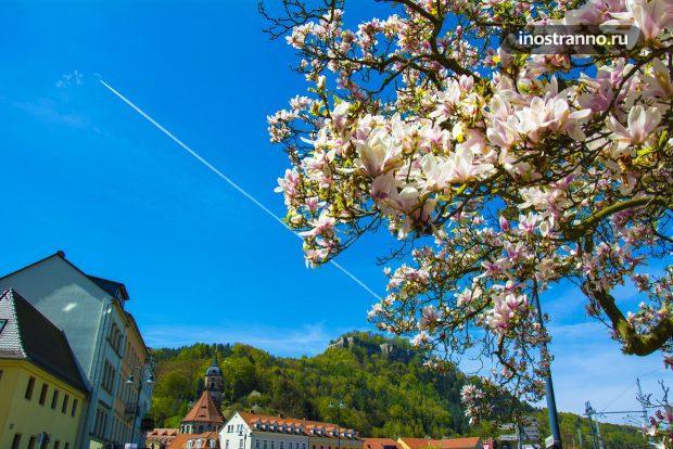 Саксонская Швейцария весной