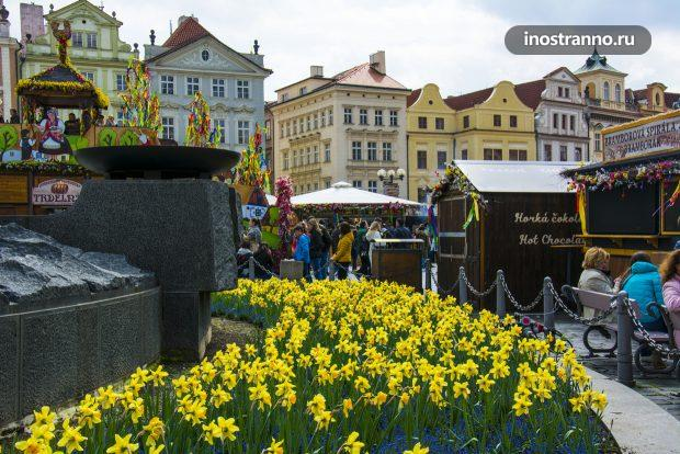 Нарциссы и весна в Праге