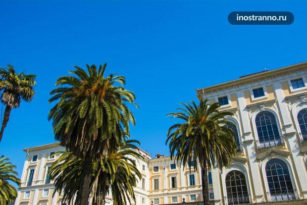 Пальмы в парке Рима