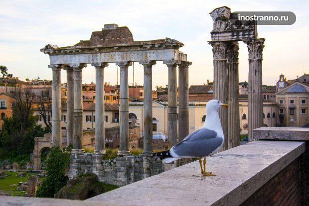 Римский форум и чайка