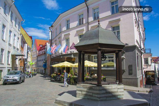 Кошачий колодец в Таллине