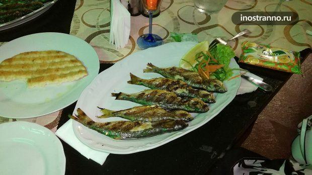 Рыба чернокоп в Болгарии