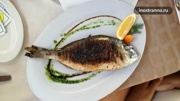 Рыба дорада в Болгарии