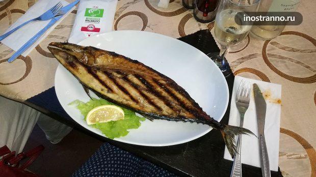 Рыба пеламида в Болгарии