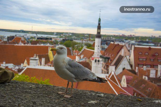 Вид с холма Вышгород в Таллине