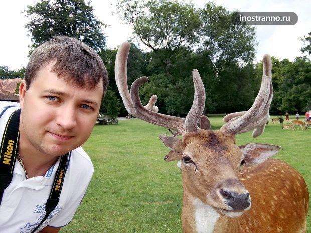 Селфи с животным оленем в Чехии