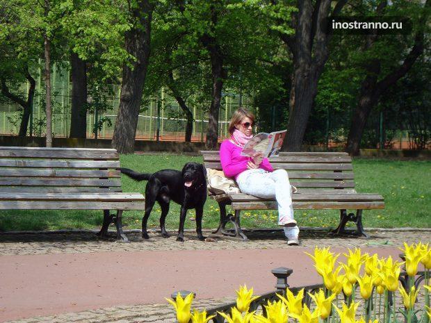 Чехи и собаки