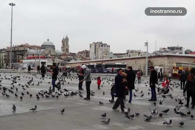 Штраф за кормление голубей в Италии и Чехии