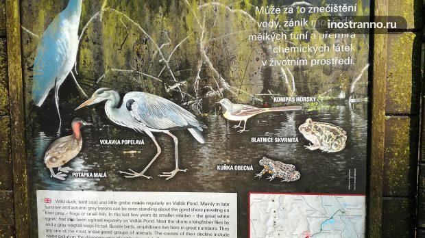 Животные национального парка
