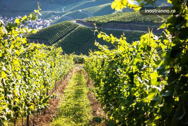 Виноградники в Германии