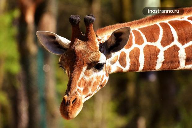 Зоопарк Базеля