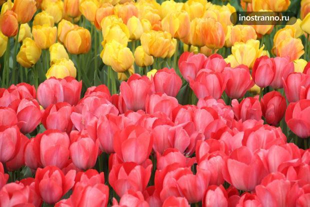 Парк тюльпанов Гюльхане в Стамбуле