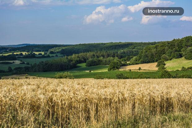 Пшеничные поля в Чехии