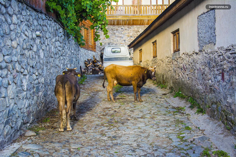 Коровы в Грузии