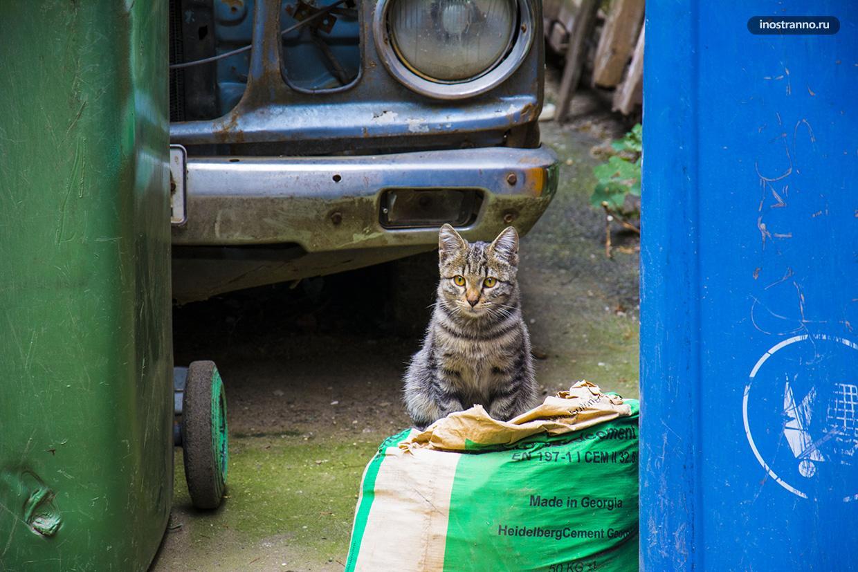 Коты в Грузии