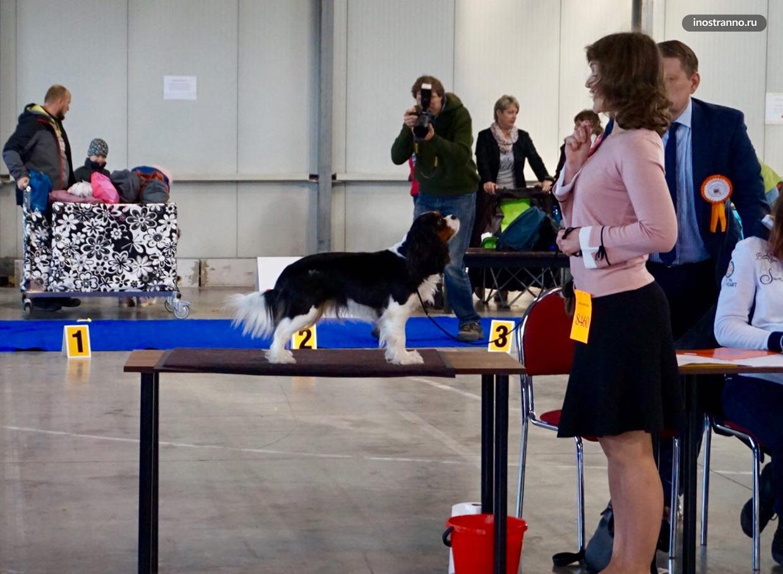 Выставка собак в Праге