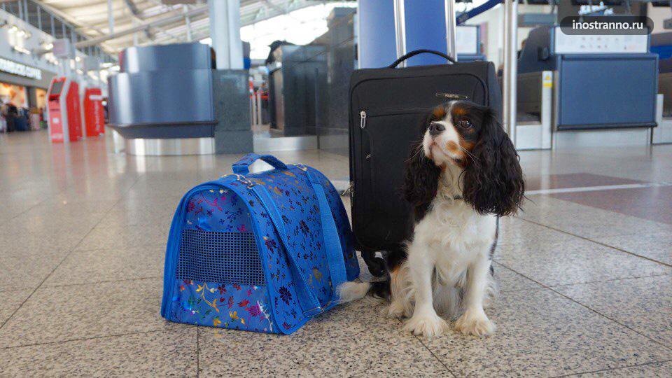 Перелет с собакой условия