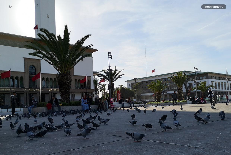 Обман туристов с голубями