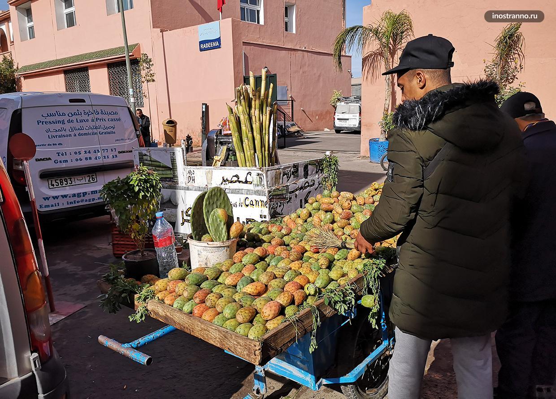 Продажа кактуса