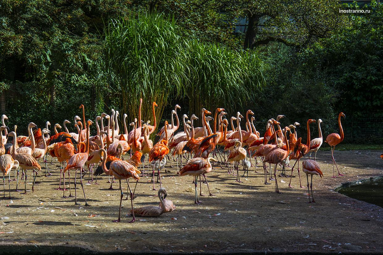 Фламинго зоопарк в Праге