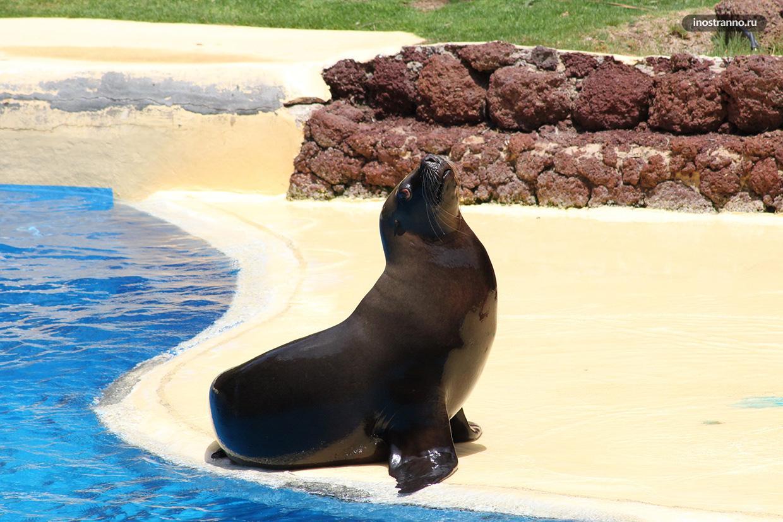 Marineland зоопарк шоу тюленей на Майорке