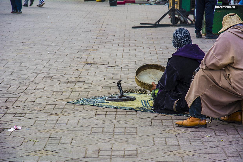 Заклинатель змей в Марокко