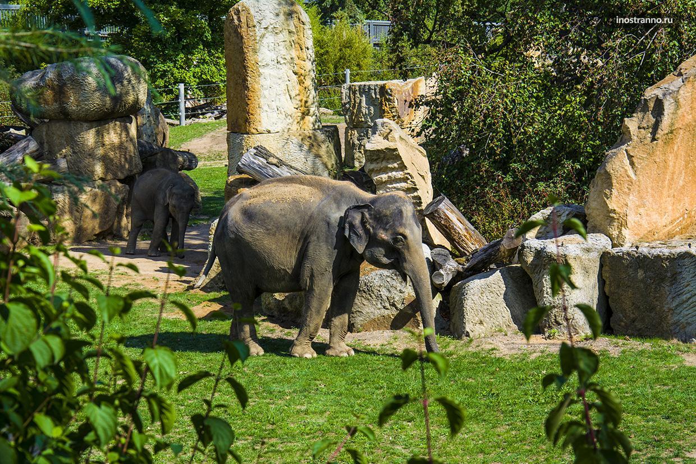 Слоны в чешском зоопарке