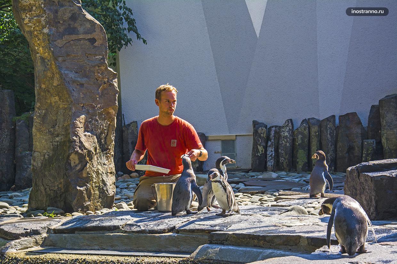 Кормление пингвинов