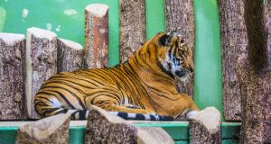 Зоопарк в Праге – фото с прогулки