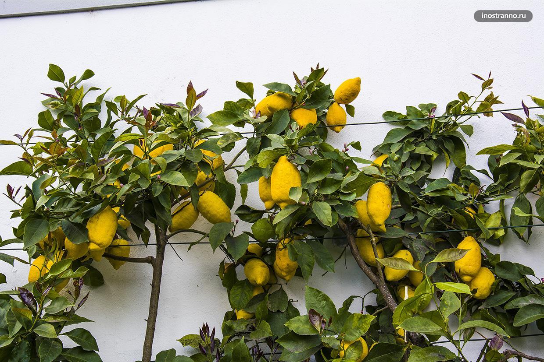 Португальские цитрусовые