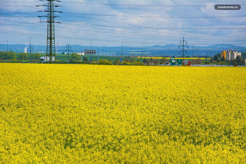 Рапсовые поля желтого цвета в Европе