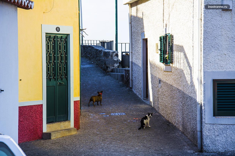 Кошки в Португалии