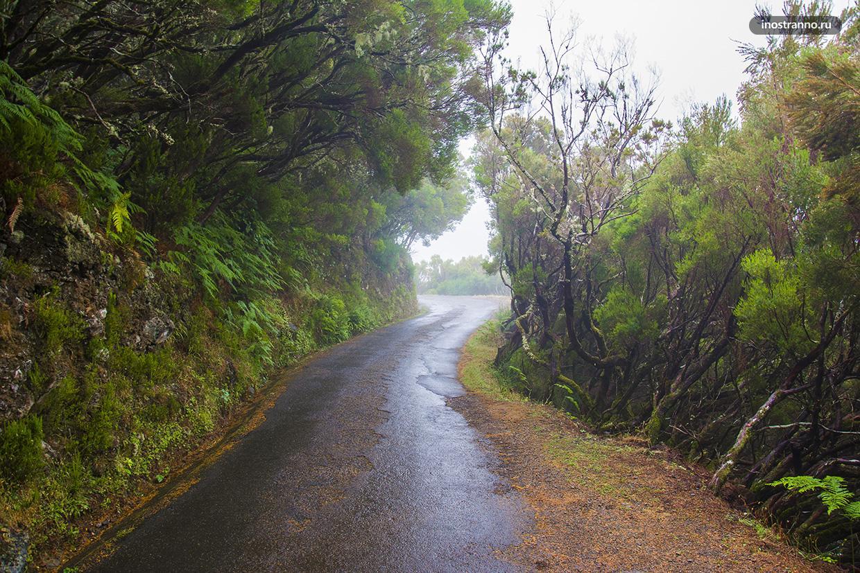 Природа острова Мадейра