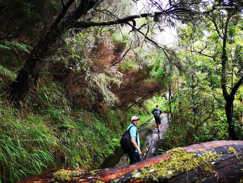 Прогулка по лесу лауриссильва