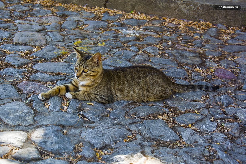 Балканский кот