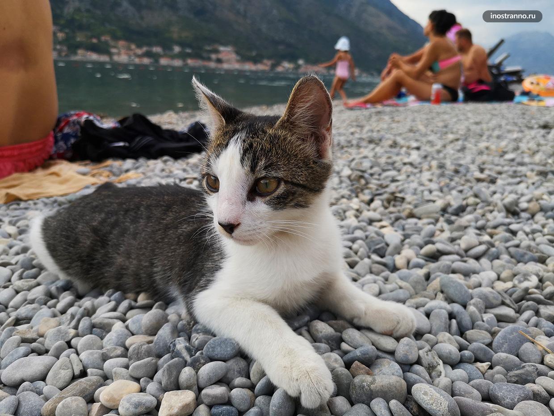 Кот на пляже в Которе