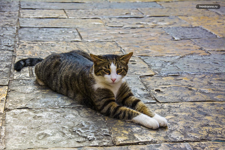 Кошки Котора