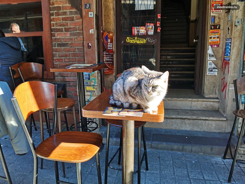 Кот в Баре