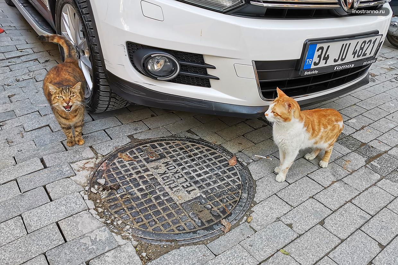 Коты на парковке Стамбула