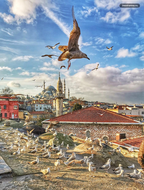 Крыша Куббе Стамбул бесплатная смотровая с чайками