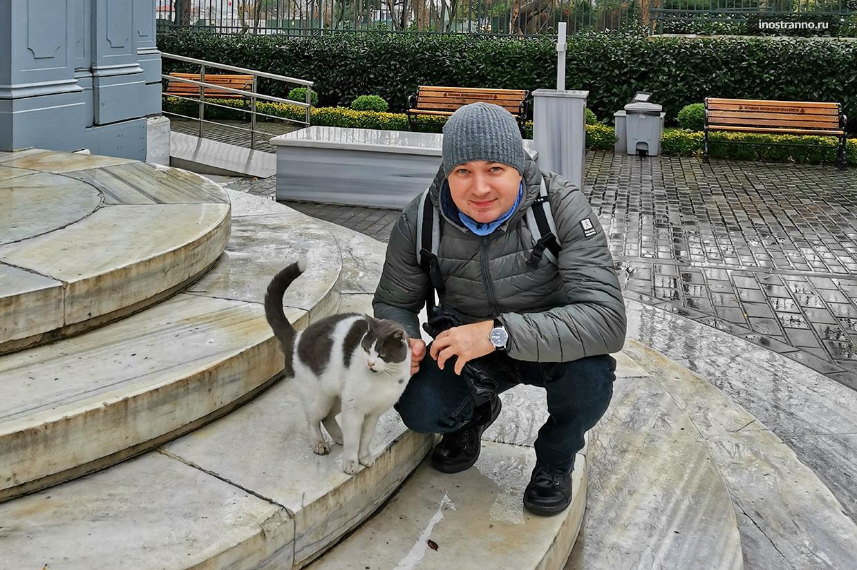 С котом по Стамбулу