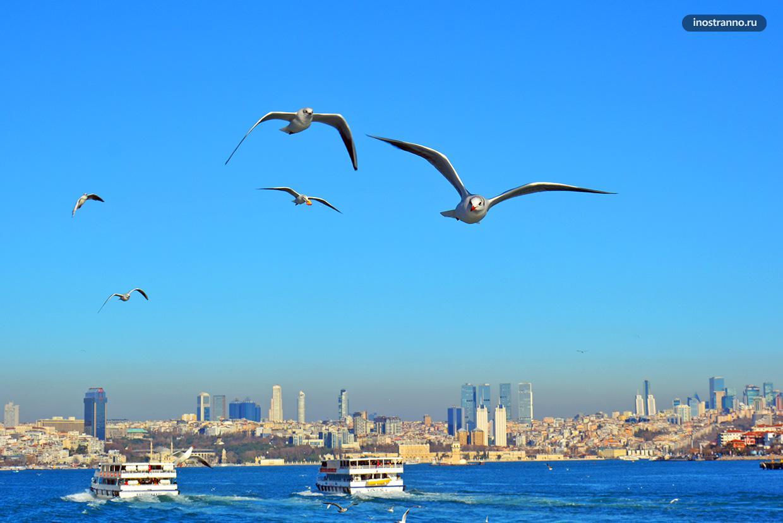 Фото чайки в Стамбуле
