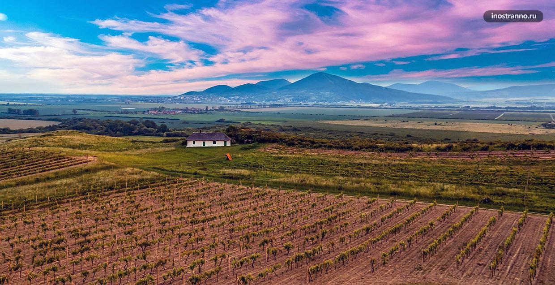 Винодельческий регион Токай в Венгрии