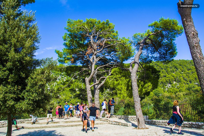Деревья Хорватии
