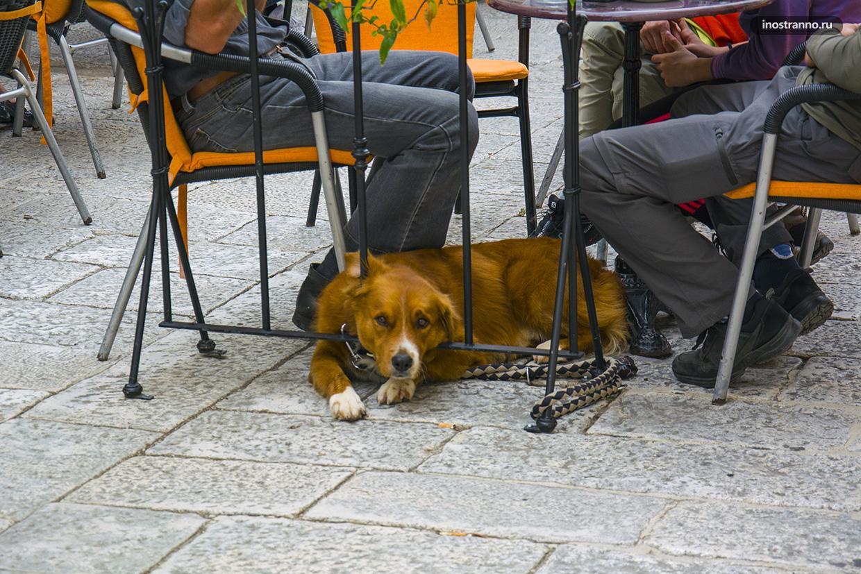 Собака в Хорватии